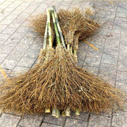 国产 IK-0 竹扫把 120cm