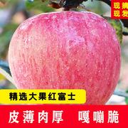 紅富士 75-80 陜西精品紅富士蘋果 果徑:75-80MM 產地:陜西 照片紅