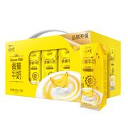 蒙牛  奶特香蕉牛奶 243ml×12  箱
